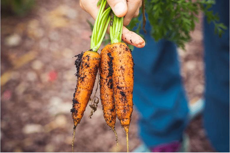 Sundhed på planter