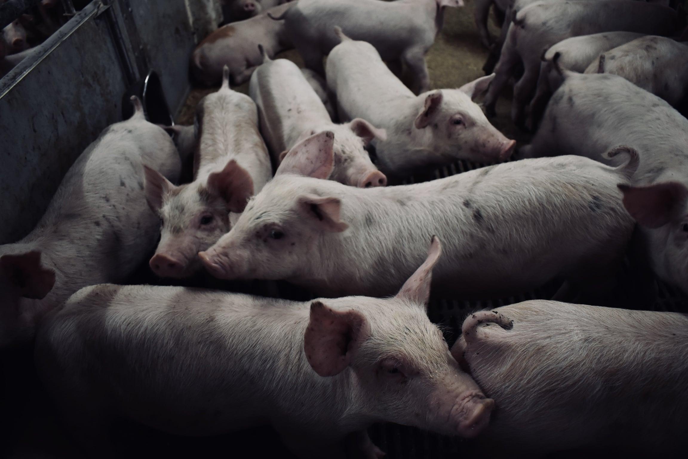 Hvad med de dygtige landmænd, som arbejder med dyrene?
