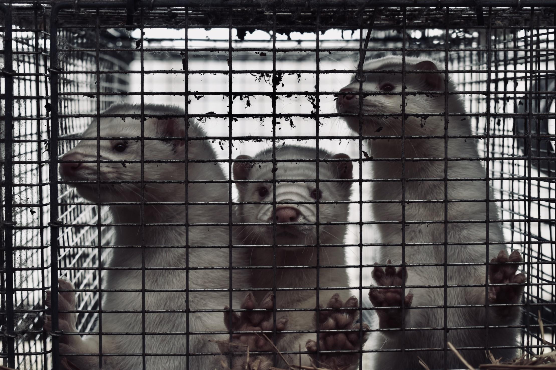 Hvad er anti-speciesisme og hvorfor er det vigtigt?