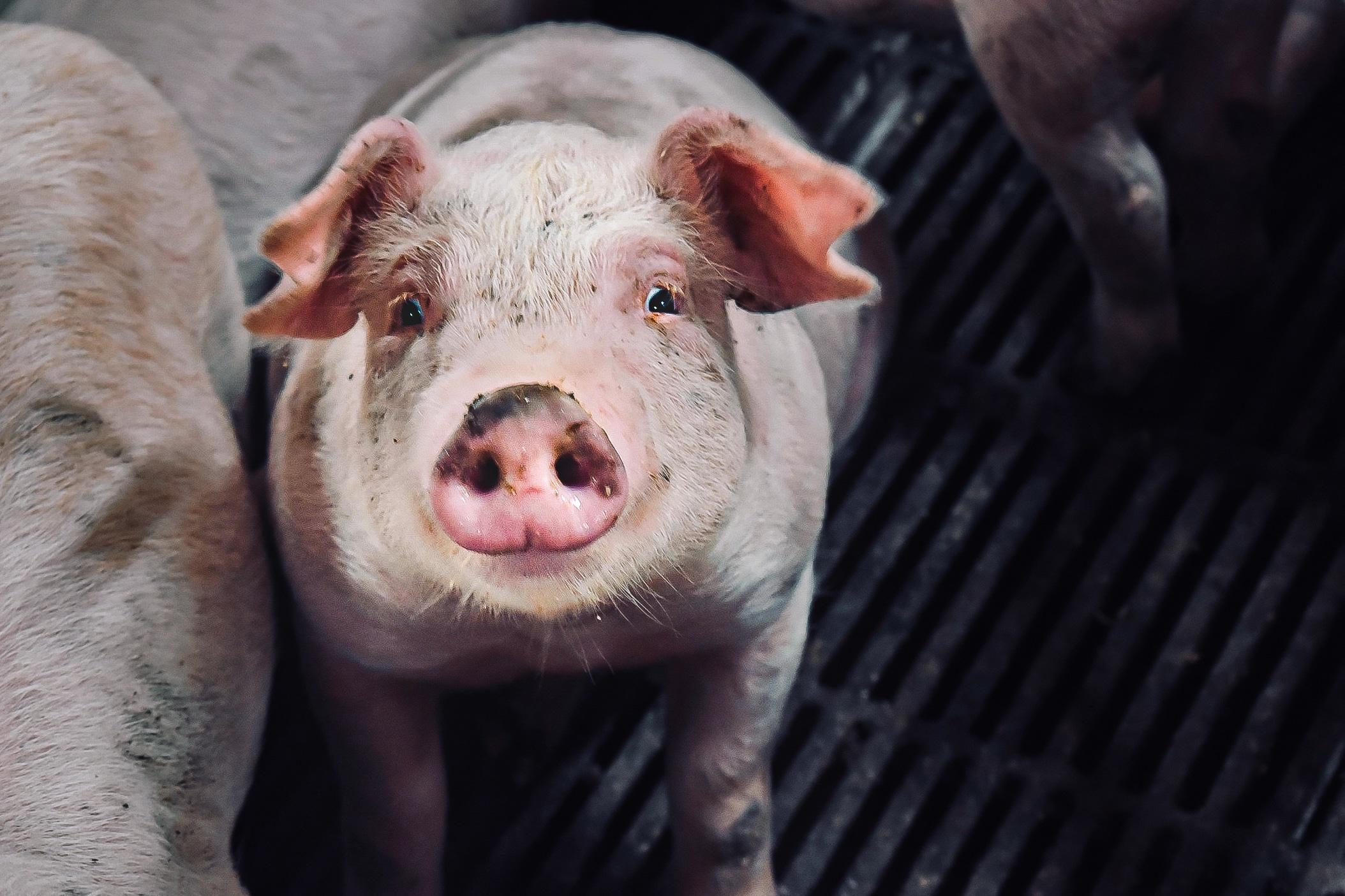 Typiske spørgsmål til Veganerpartiets politik