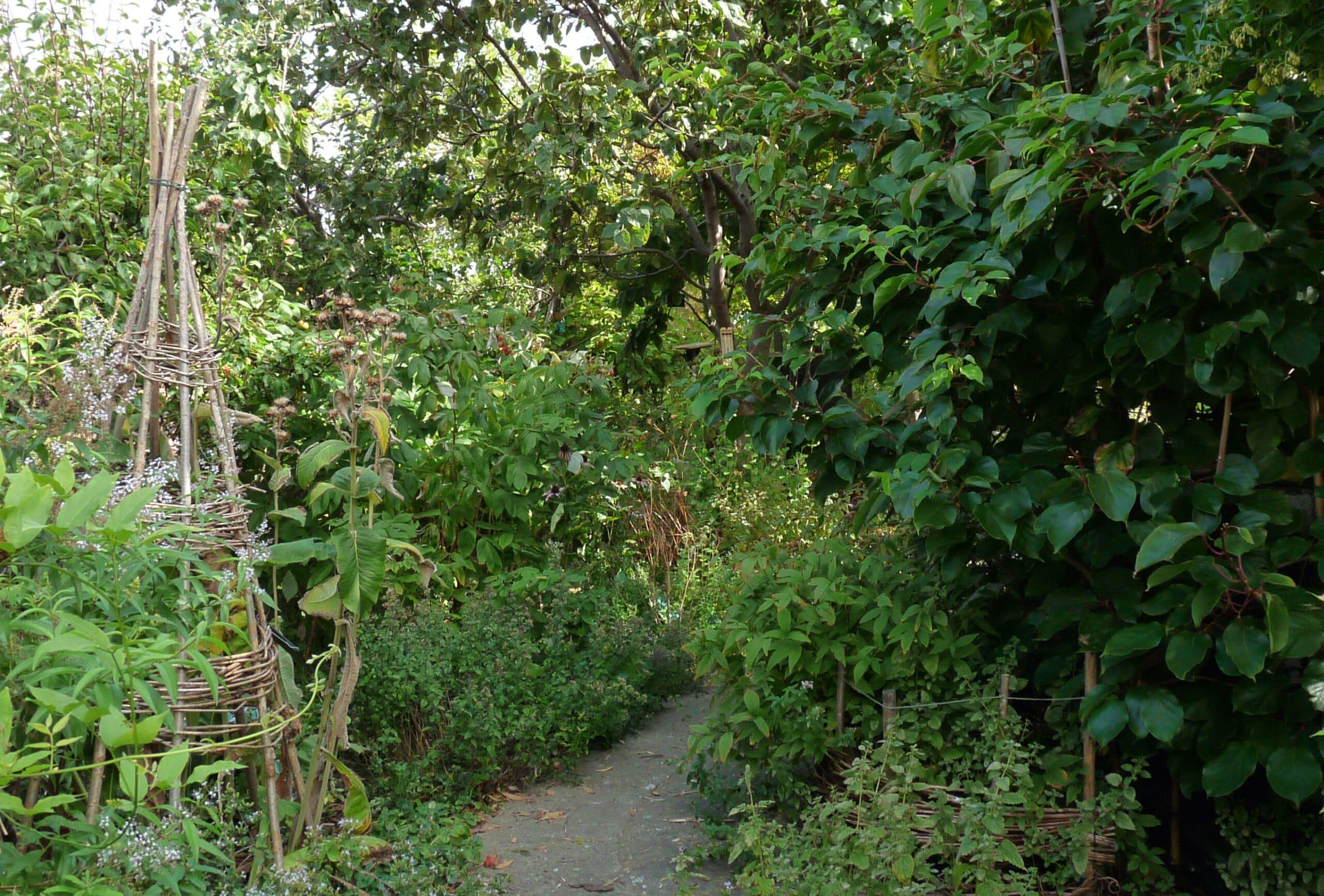 Permakultur og plantegødning i fremtidens landbrug