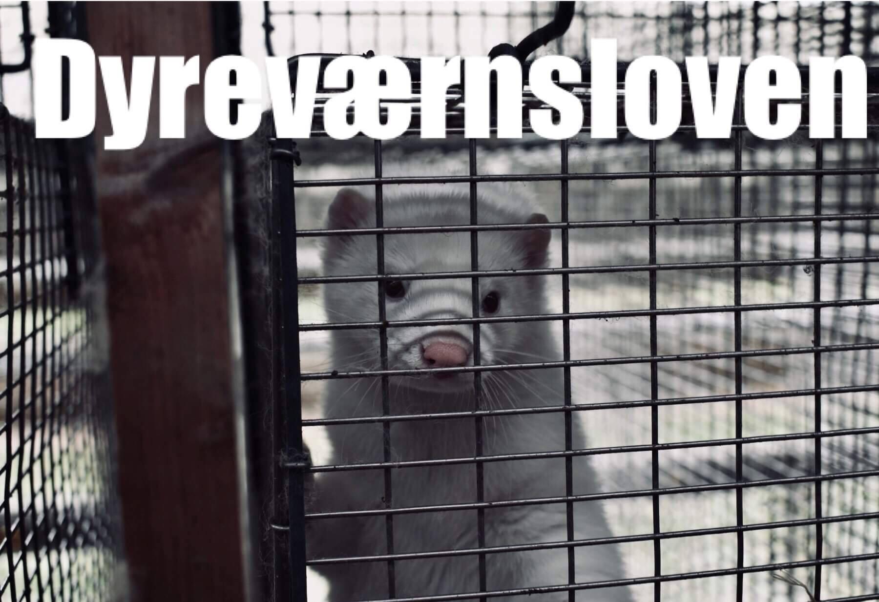 Dyreværnsloven