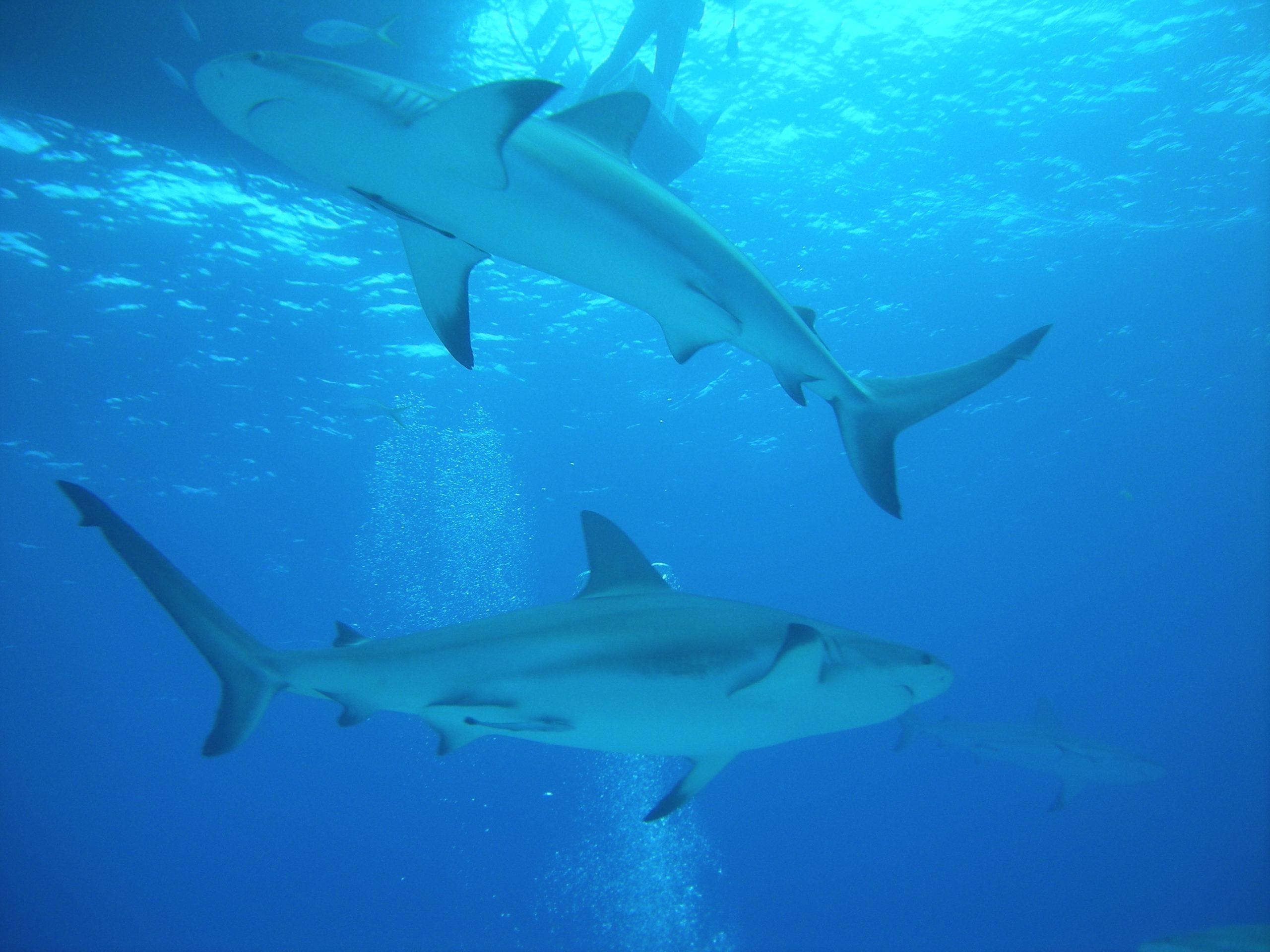 Arken solgte fredet hajkød, men hvad mener eksperterne?